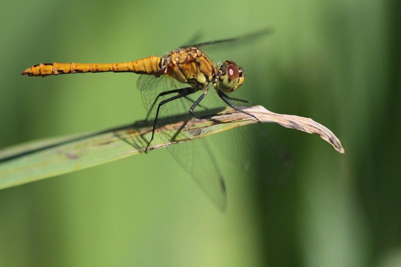 Visite guidée de la réserve naturelle nationale de Vauville - LA HAGUE - Photo 4